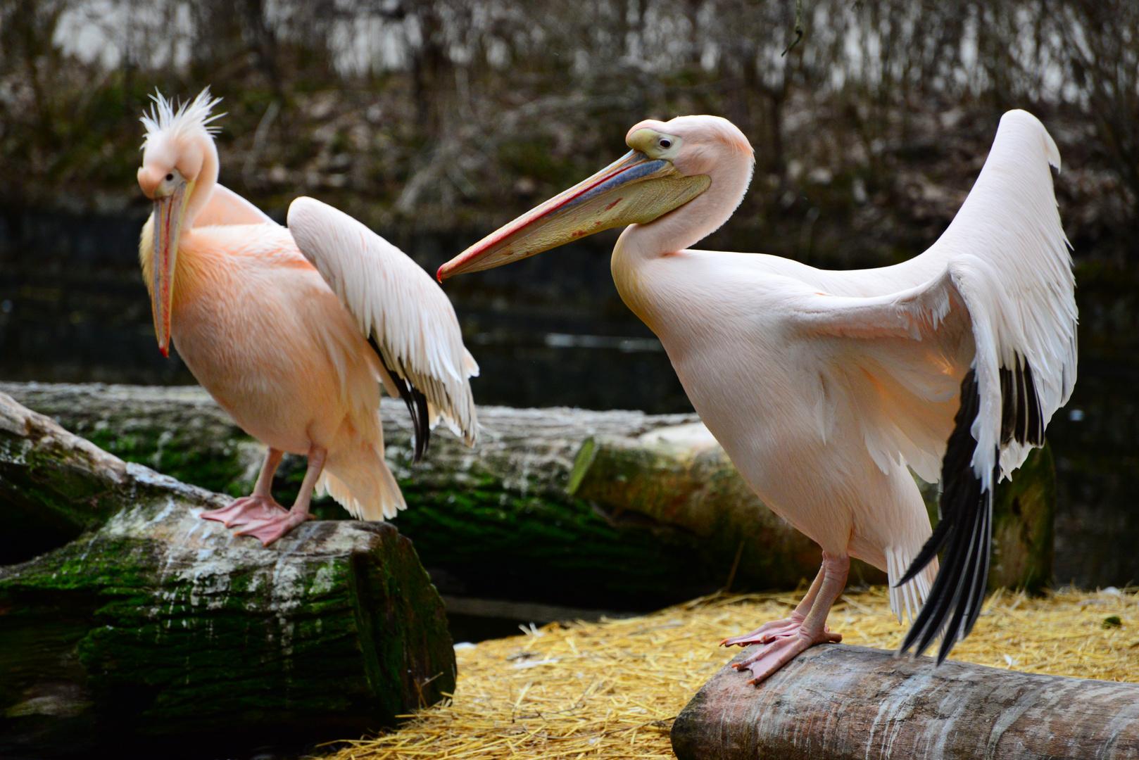 Kuck mal mein Sohn, ein Flamingo!