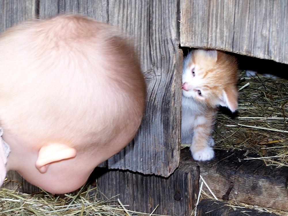 Kuckuck, wer hat sich da versteckt ?