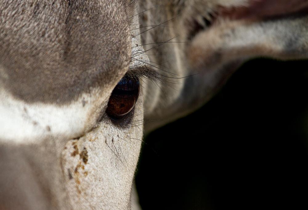 Kudu ganz nah