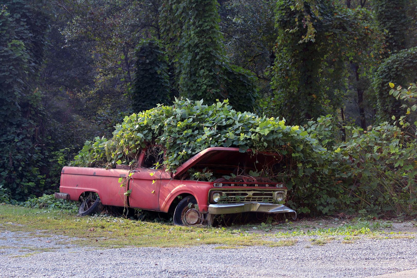 KUDZU (Pueraria montana) überwächst alles, auch Autos... West Virginia, USA