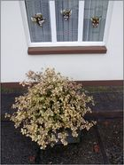 Kübelpflanzen Nr. 9