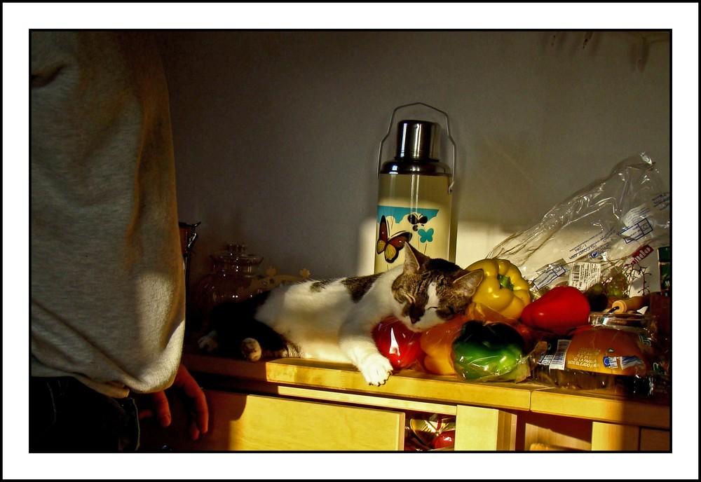 küchen-chaos mit katze....
