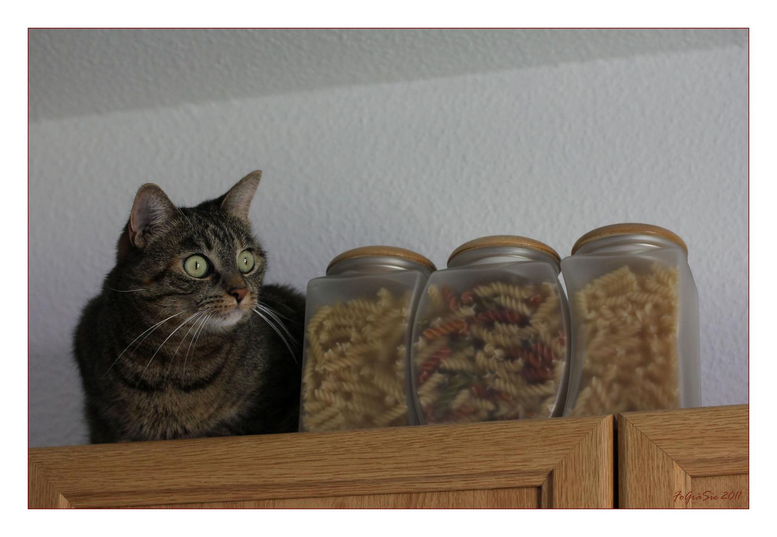 * Küchenkatze *