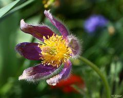 Blumen, Makro
