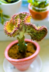 Küchentisch Kaktus