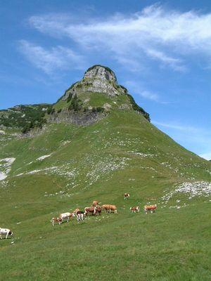 Kühe grasen vor einem Berg