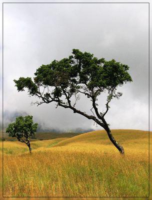 Kümmerlicher Baum