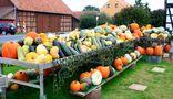 -Kürbis-Herbstdekoration vom Feinsten- von Wilhelm Wedekind