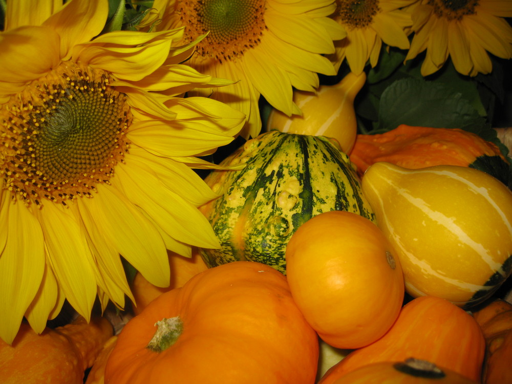 Kürbiskorb mit Sonnenblumen