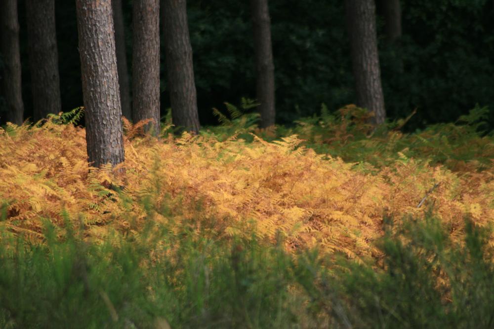 ...kürzlich im Hasslocher Wald