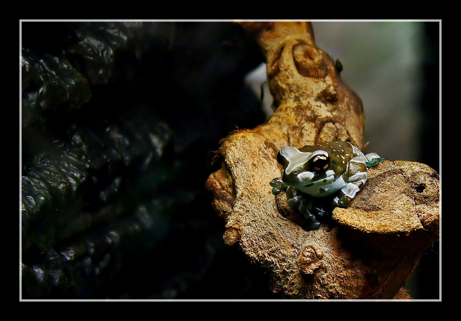 küss den Frosch ...