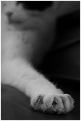 Küss die Hand....und stich dich nicht!