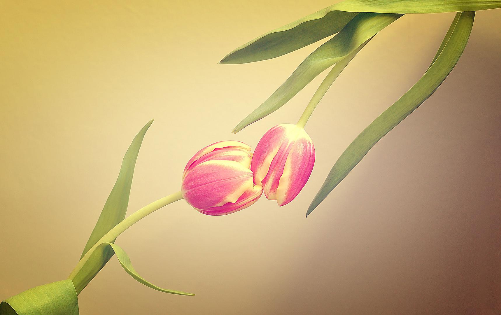 Küss mich, ich bin der Frühling