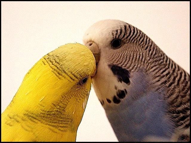 Küsschen...