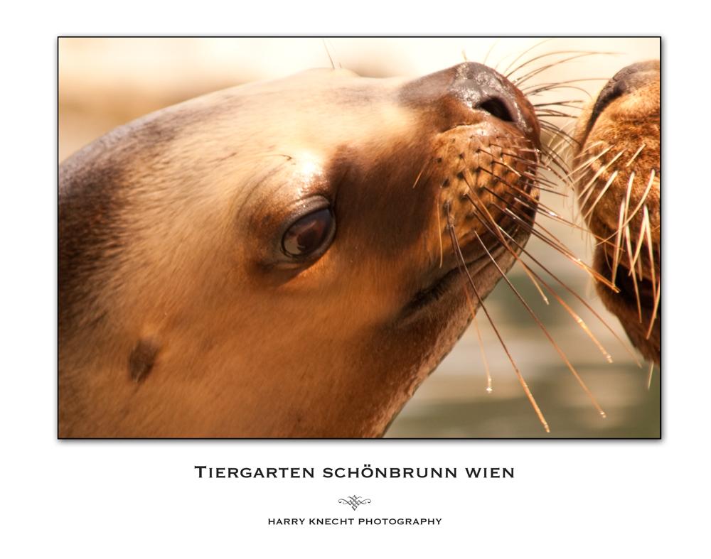 Küsschen bitte !