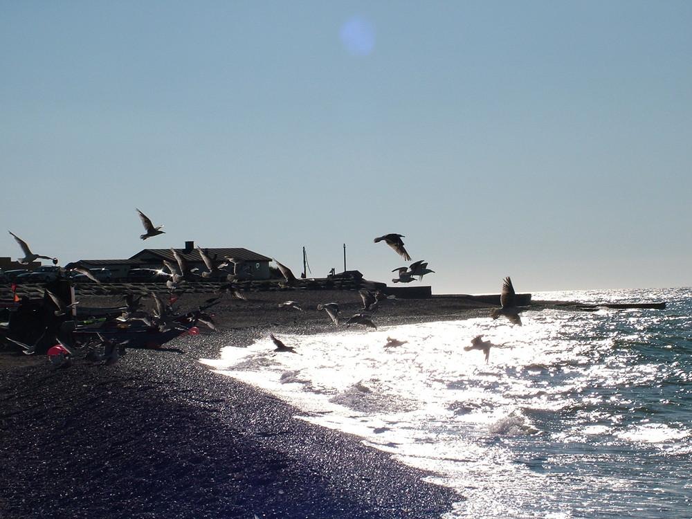 Küste Dänemark 2