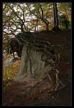 Küstenbäume 2