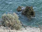 Küstenblick an der Algarve