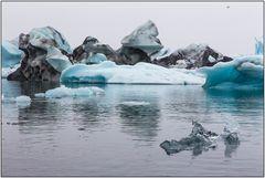 Küstenseeschwalbe :-)