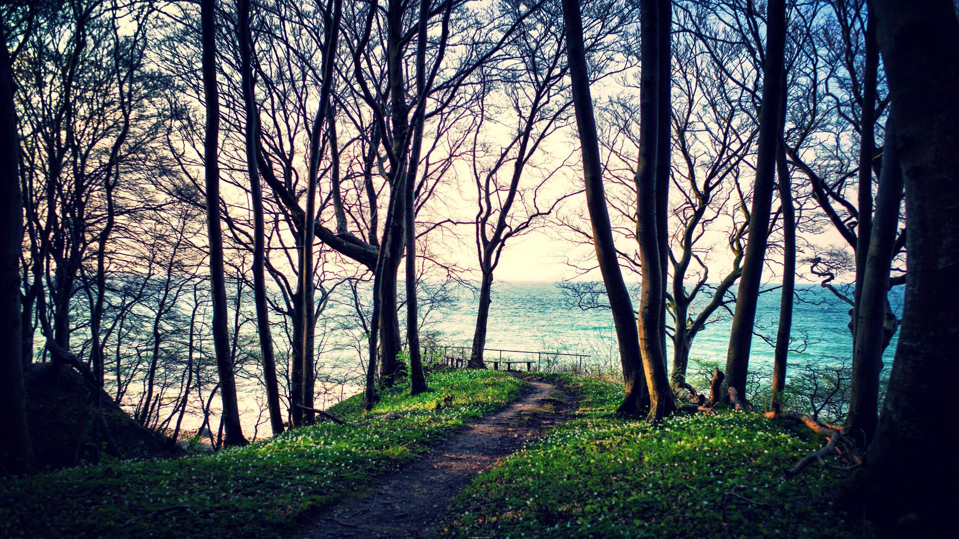 Küstenwald auf Rügen