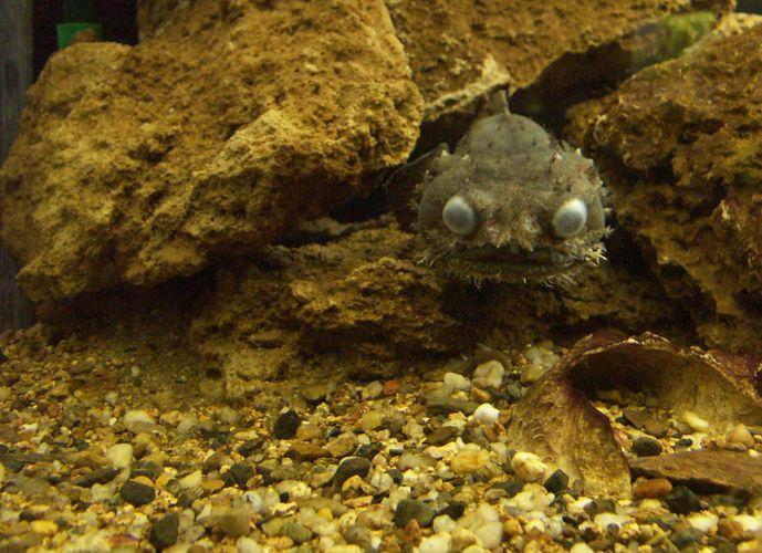 Kugel im Aquarium