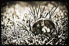 Kugel in der Wiese mit Spiegelung