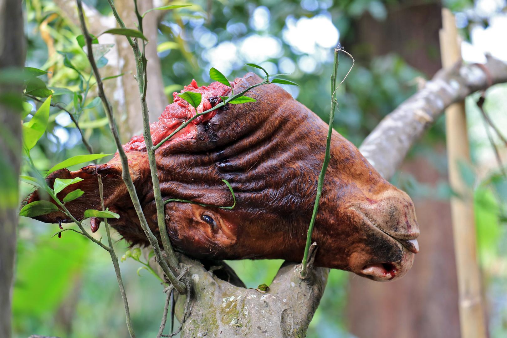Kuh auf Baum