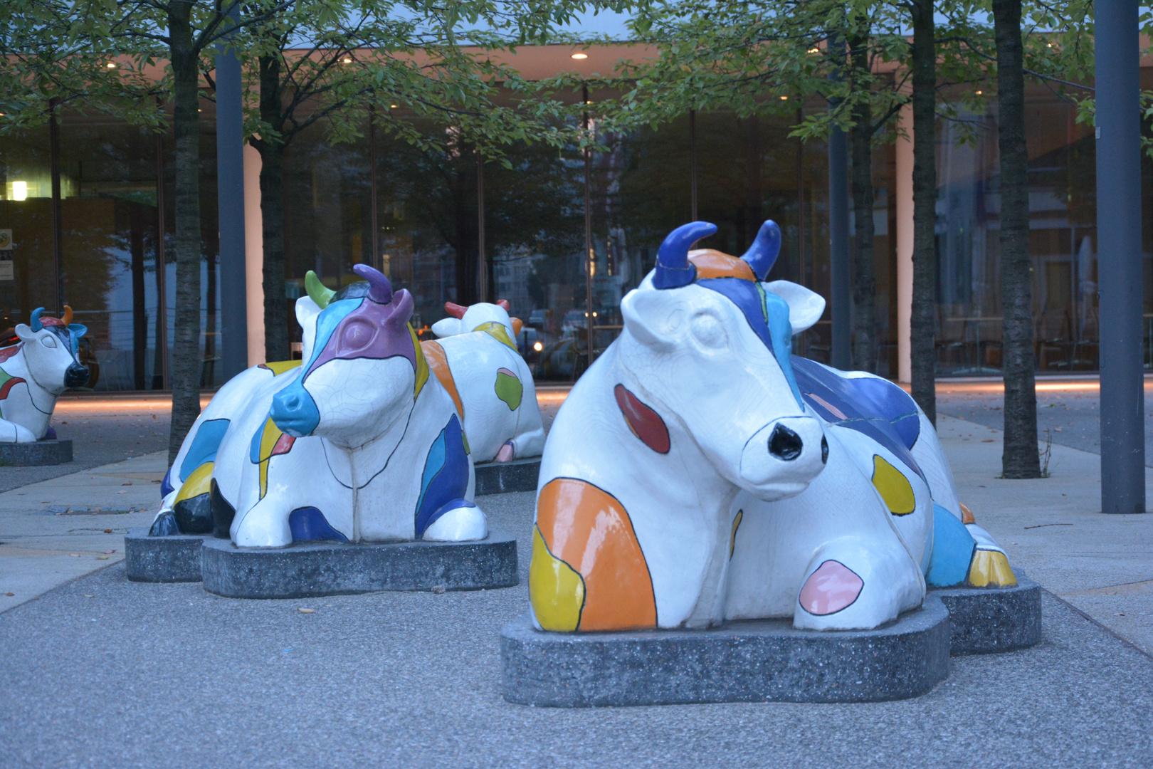 Kuh in der Stadt