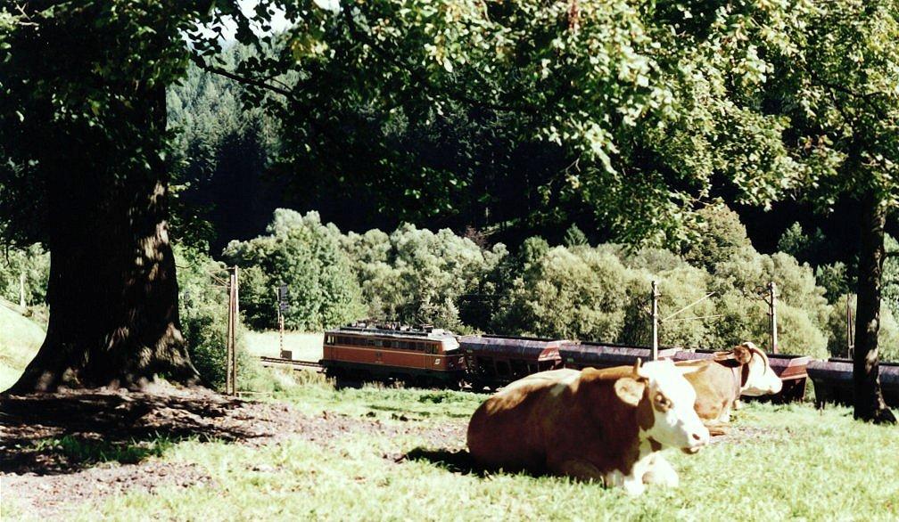 Kuh mit Ruh und nicht verfressen - Vergleich I