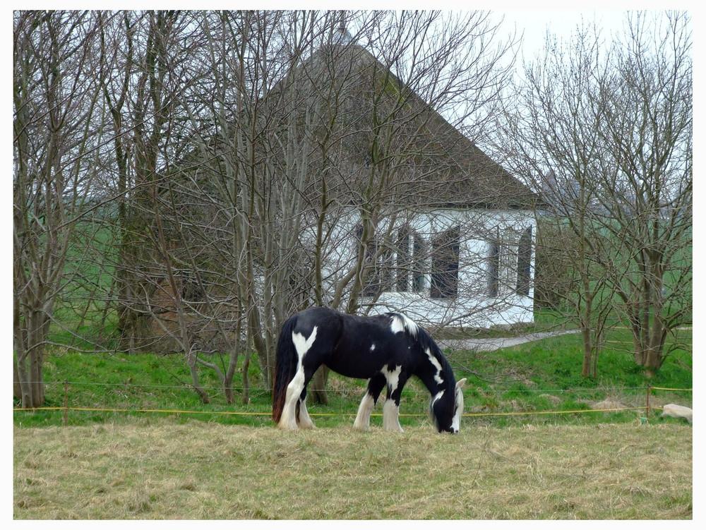 Kuh oder Pferd???