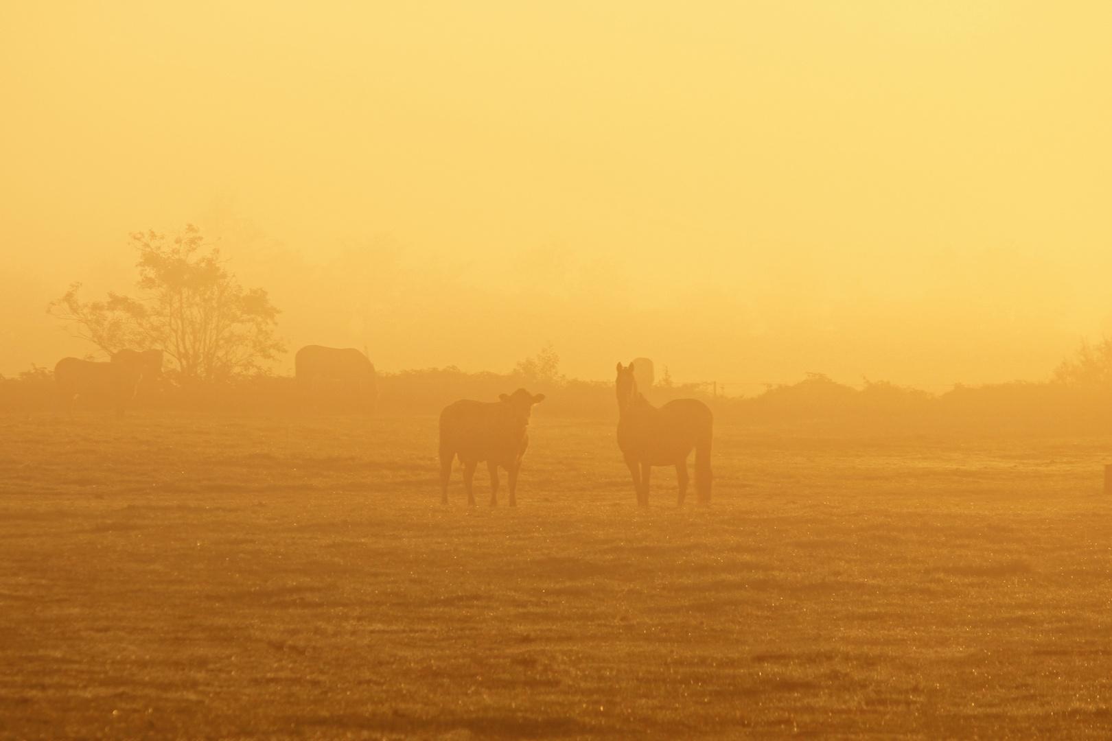 Kuh und Pferd im Sonnenaufgangsnebel