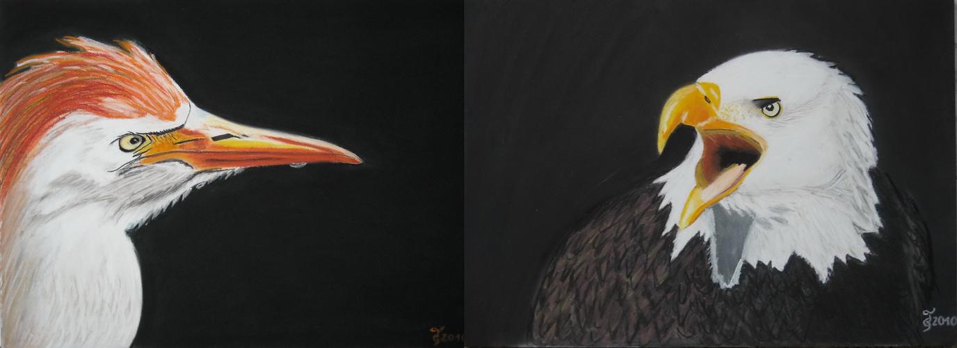 Kuhreiher und Weißkopfseeadler Collage meiner in dieser Woche gemalten Bilder