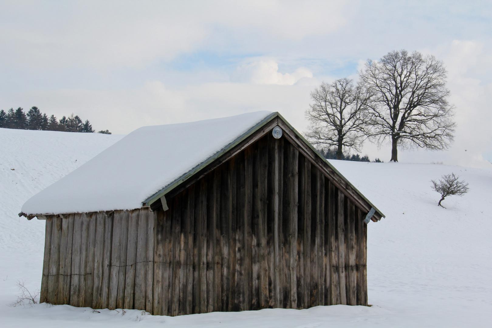 Kuhweide im Winter