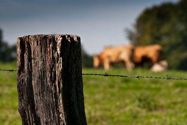 Kuh.Weide.Zaun.