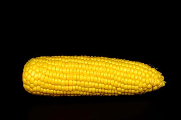Kukuruz