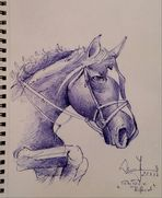 Kuli-Pferd....