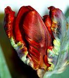 Kunst an der Tulpe