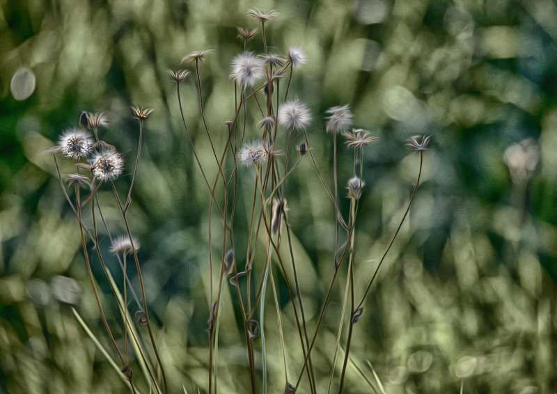 Kunst-Blumen