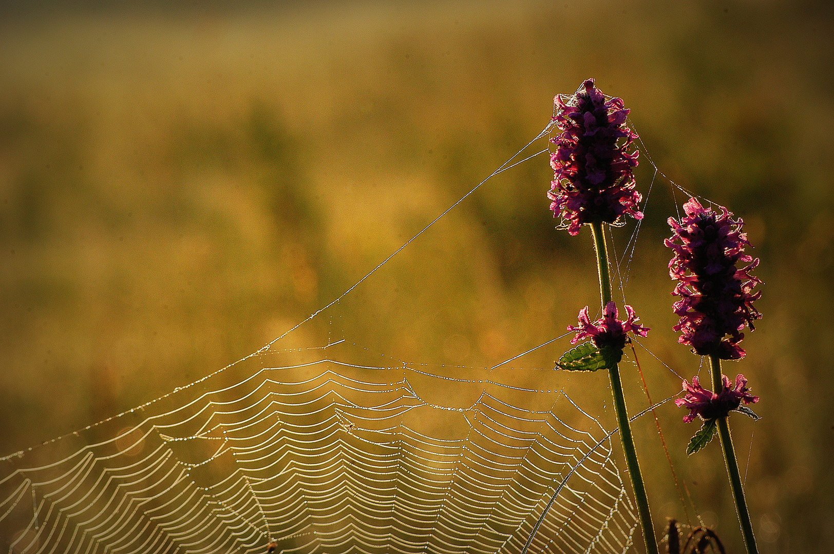Kunst einer Spinne