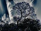 kunst in der natur ...