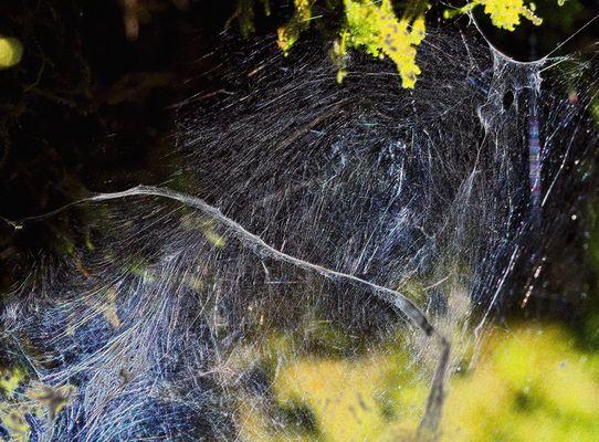 Kunstvoll vernetzt! - Oeuvre d'art dans la forêt!