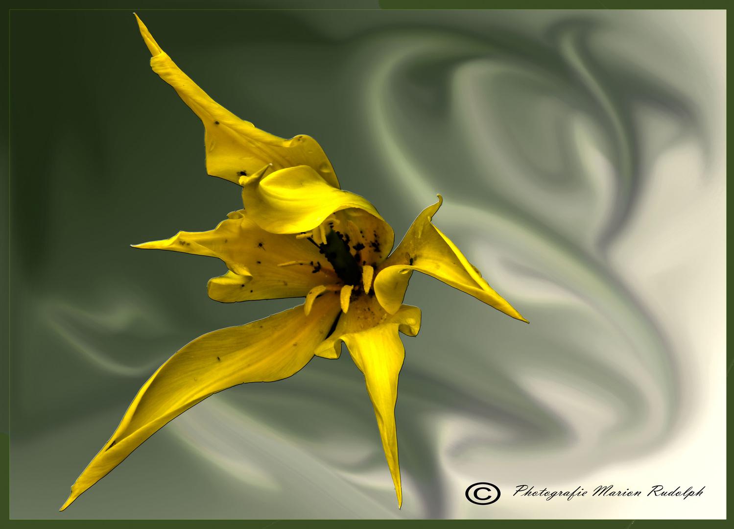 Kunstvolle Blüte