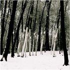 Kunst.Wald