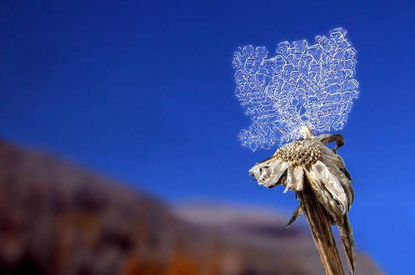 Kunstwerk aus Eis