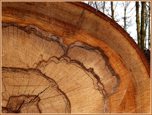 Kunstwerk des Waldes