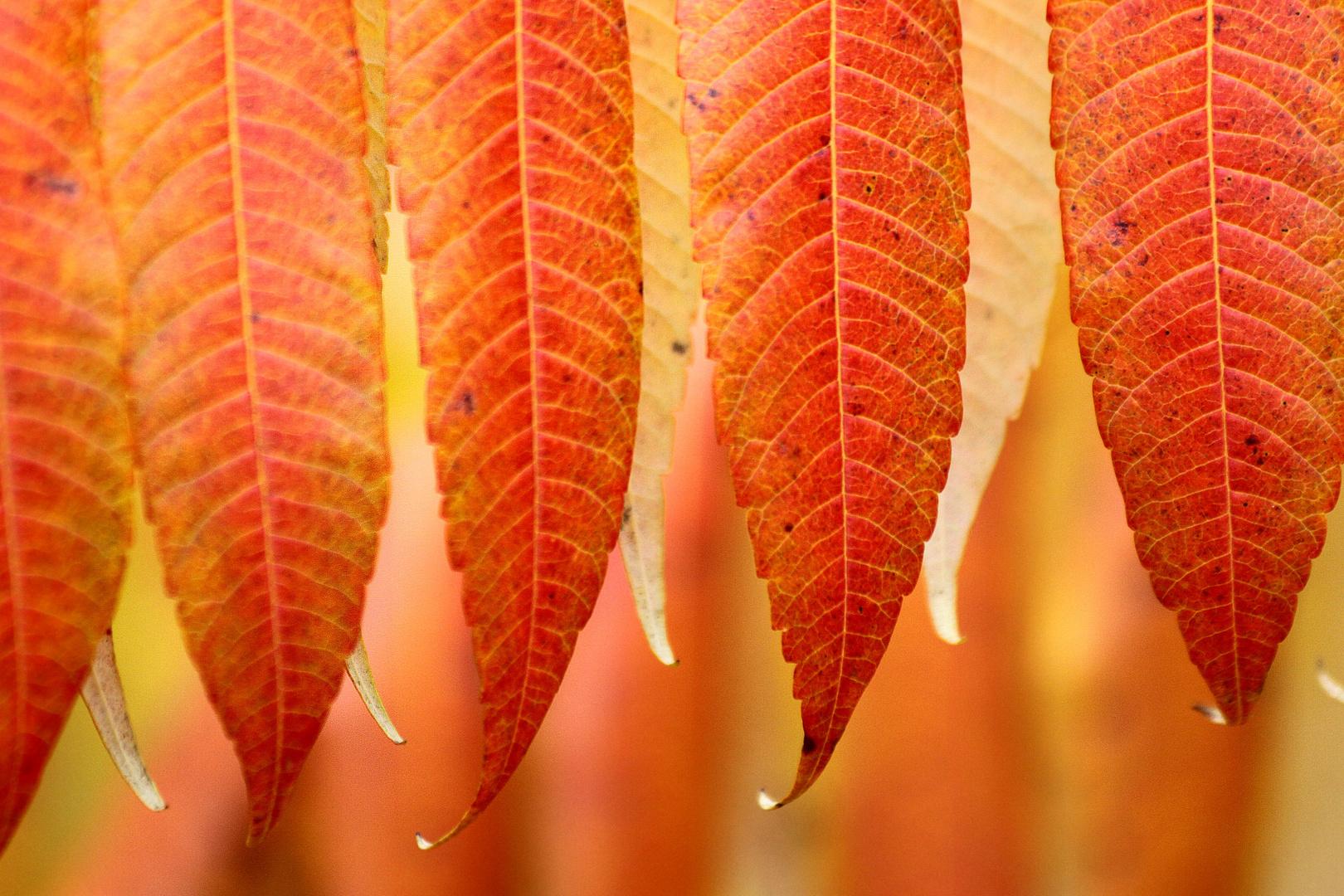 Kunterbunt ist dieser Herbst....................................