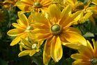 Kunterbunt - wäscht weiß raus und gelb rein