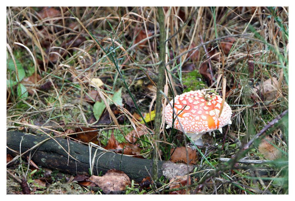 Kunterbunter Herbst II