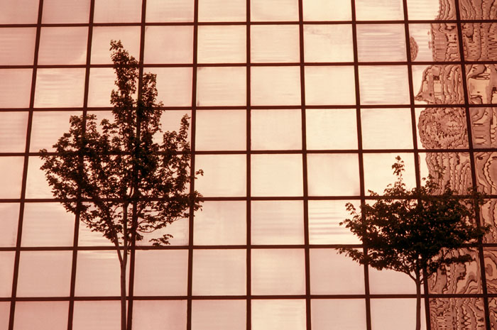 Kupferbäume