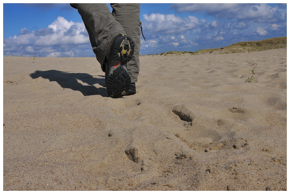 Kurische Nehrung - Sanddüne - Litauen